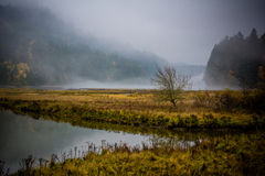Goldstream Estuary in Autumn. With Fog Rolling In Royalty Free Stock Photography