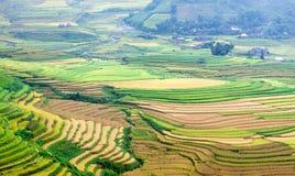 Goldterassenförmig angelegte Reisfelder mit Sonnenlicht in MU Cang Chai, Vietnam Lizenzfreies Stockbild