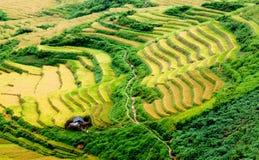 Goldterassenförmig angelegte Reisfelder mit Sonnenlicht in MU Cang Chai, Vietnam Lizenzfreie Stockbilder