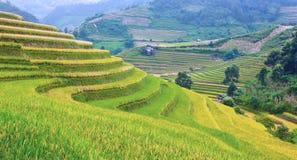 Goldterassenförmig angelegte Reisfelder mit Sonnenlicht in MU Cang Chai, Vietnam Stockbild