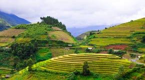 Goldterassenförmig angelegte Reisfelder mit Sonnenlicht in MU Cang Chai, Vietnam Lizenzfreie Stockfotos