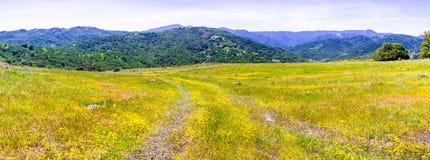 Goldvorkommen Wildflowers, die in Süd-San Francisco Bay blühen; fruchtbare Hügel sichtbar im Hintergrund; San Jose, Kalifornie stockbilder