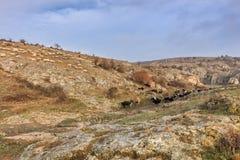 Gole di Dobrogea, Romania Immagine Stock