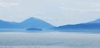 Golem Grad, επίσης γνωστό ως νησί φιδιών Στοκ Εικόνες