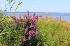 Golf av Finland, seacoast arkivbild