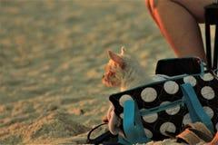 Golf av Mexico med en hund arkivfoton