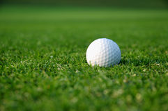 Golf background. Close up of a golf ball on the grass Stock Photos