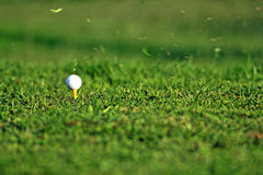 Golf Ball. On the Green Grass with grass particles in the air Stock Photos