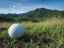 Golf ball. White Golf Ball laying on Green Grass Stock Photography