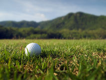 Golf ball. White Golf Ball laying on Green Grass Royalty Free Stock Photography