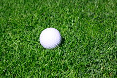 Golf ball. On a grass Stock Photography