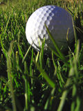 Golf Ball. Sits in sunlight Royalty Free Stock Photo