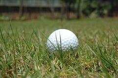 Golf Ball. On grass Stock Image