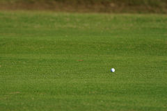 Golf ball. On the grass Stock Images