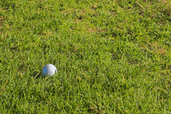 Golf ball. On the grass. Copy space Royalty Free Stock Images