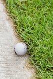 Golf ball on the cart path. Close up dirty golf ball on the cart path Royalty Free Stock Photo
