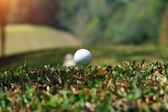Golf ball close up in golf coures at Thailand. Golf ball close up in grass field with sunset. Golf ball close up in golf coures at Thailand Royalty Free Stock Photography