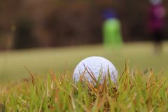 Golf ball close up in golf coures at Thailand. Golf ball close up in grass field with sunset. Golf ball close up in golf coures at Thailand Stock Photo