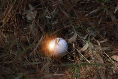 Golf ball close up in golf coures at Thailand. Golf ball close up in grass field with sunset. Golf ball close up in golf coures at Thailand Royalty Free Stock Photo