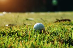 Golf ball close up in golf coures at Thailand. Golf ball close up in grass field with sunset. Golf ball close up in golf coures at Thailand Royalty Free Stock Image