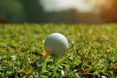Golf ball close up in golf coures at Thailand. Golf ball close up in grass field with sunset. Golf ball close up in golf coures at Thailand Royalty Free Stock Images