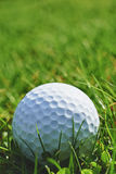 Golf ball. Close-up of golf ball resting in grass and space for copy royalty free stock photos
