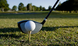 Golf Ball and Club. A golf ball and club on a golf course Royalty Free Stock Image