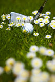 Golf ball and club between daisy flowers on the go Stock Photos