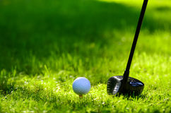 Golf ball and club. On green grass Royalty Free Stock Image