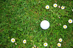 Golf ball on course Royalty Free Stock Photography
