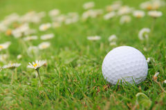 Golf ball on course Royalty Free Stock Photos