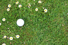 Golf ball on course Royalty Free Stock Image