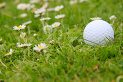 Golf ball on course Stock Image