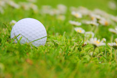Golf ball on course Stock Photography