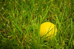 Golf-ball on course. Yellow golf ball on course. Close up. Background Royalty Free Stock Images