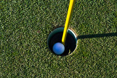 Golf ball in the cup Royalty Free Stock Images