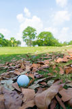 Golf ball on dry leaves. At golf course Royalty Free Stock Images