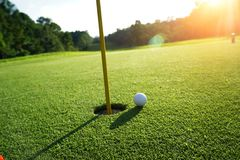 Golf ball on the edge of hole on the green grass royalty free stock photography