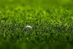 Golf Ball on Fairway. Golfball lying in lush green grass on the fairway Royalty Free Stock Photo