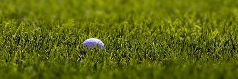 Golf Ball on Fairway. Golfball lying in lush green grass on the fairway Stock Images
