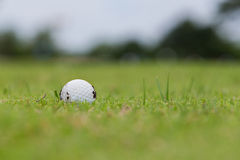 Golf ball on fairway. Close up dirty golf ball on the fairway Royalty Free Stock Photography