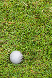 Golf ball on fairway. Close up dirty golf ball on the fairway Stock Photography