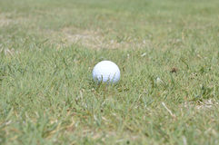 Golf ball on a fairway Stock Image