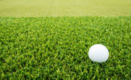Golf ball. On the lawn Royalty Free Stock Photo