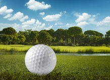 Golf ball and the golf course. Extreme close up stock photography