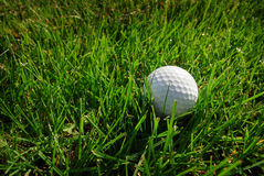 Golf ball on a grass Royalty Free Stock Image
