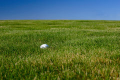 Golf Ball Grass Royalty Free Stock Photography