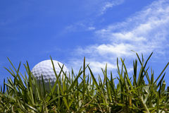 Golf Ball in Grass with Blue Sky Royalty Free Stock Images