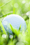 Golf ball on grass with bokeh background Stock Image