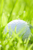 Golf ball on grass with bokeh. Close up of golf ball on grass with bokeh background Stock Photos
